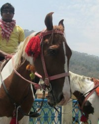 bmc_students_having_fun_of_horse_riding.